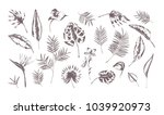 set of exotic leaves of...   Shutterstock .eps vector #1039920973