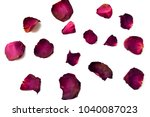 dry petal of rose isolated on...   Shutterstock . vector #1040087023