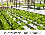 organic hydroponic vegetable... | Shutterstock . vector #1040090083