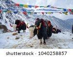yak at the tsomgo  changu  lake ... | Shutterstock . vector #1040258857