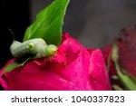 worm  caterpillar to butterfly...   Shutterstock . vector #1040337823
