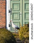 a stork warming in the sun on... | Shutterstock . vector #1040414047
