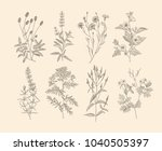 vector hand drawn collection of ... | Shutterstock .eps vector #1040505397