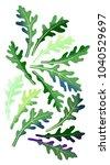 Green Arugula  Rucola  Leaves...