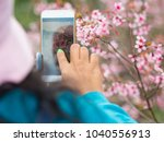 pink sakura flowers  beautiful... | Shutterstock . vector #1040556913
