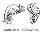 chameleon sketch. hand drawn... | Shutterstock .eps vector #1040564743