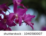 orchid flower blossom | Shutterstock . vector #1040580007