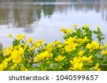 spring background with yellow   ... | Shutterstock . vector #1040599657