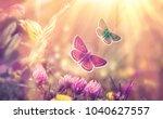 butterfly flying in a meadow of ... | Shutterstock . vector #1040627557