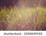 green grass close up in the... | Shutterstock . vector #1040649433