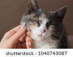 woman hand stroking happy... | Shutterstock . vector #1040743087