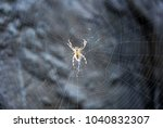 Small photo of Spider. In September, in the forests of the middle belt, spiders often meld their networks for insects