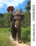 Young beautiful girls go on the elephant in jungle of island Samui, Thailand - stock photo
