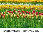 flower bed of tulips in... | Shutterstock . vector #1040939137