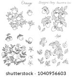 ink sketch of orange fruits and ... | Shutterstock . vector #1040956603