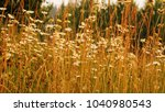 autumn nature background from...   Shutterstock . vector #1040980543