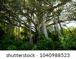 100 trunk tree in the jungle of ... | Shutterstock . vector #1040988523