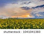 sunset over a field of oilseed... | Shutterstock . vector #1041041383