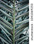 close up of palm tree leaves. a ... | Shutterstock . vector #1041069253