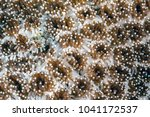 sea anemones are a group of... | Shutterstock . vector #1041172537