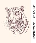 Tiger hand drawn vector llustration realistic sketch - stock vector