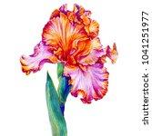 red and pink iris flower  fleur ... | Shutterstock . vector #1041251977