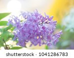 purple lilac branch with green... | Shutterstock . vector #1041286783
