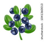 blueberry icon. realistic 3d... | Shutterstock .eps vector #1041360013