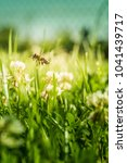 bee flying over a meadow and... | Shutterstock . vector #1041439717