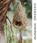 wild thai avian straw weaver...   Shutterstock . vector #1041441313