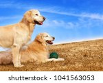 dog sitting and posing in park... | Shutterstock . vector #1041563053