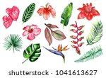 watercolor drawing of tropical... | Shutterstock . vector #1041613627