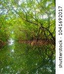 mangrove swamp in day light   Shutterstock . vector #1041692017
