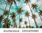 coconut palm trees farm in koh... | Shutterstock . vector #1041694483