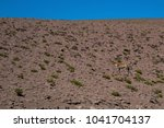 guanaco on a hill at the... | Shutterstock . vector #1041704137