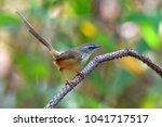 beautiful colorful bird  hill... | Shutterstock . vector #1041717517