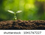 young tree plant a tree... | Shutterstock . vector #1041767227