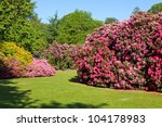 Rhododendron And Azalea Bushes...