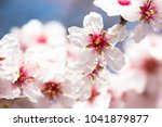 blossoming of the almond tree   Shutterstock . vector #1041879877