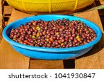 coffee beans in the bolaven... | Shutterstock . vector #1041930847