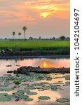 the beautiful green rice fields ... | Shutterstock . vector #1042104697