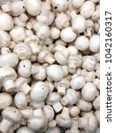 champignon harvest. white... | Shutterstock . vector #1042160317