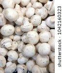 champignon harvest. white... | Shutterstock . vector #1042160323