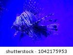 zebrafish   firefish  tastyfish ... | Shutterstock . vector #1042175953