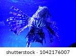 zebrafish   firefish  tastyfish ... | Shutterstock . vector #1042176007