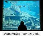 aquarium viewer silhouette | Shutterstock . vector #1042219483
