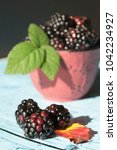 blackberries in a bowl | Shutterstock . vector #1042234927