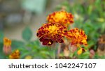 the beautiful flower | Shutterstock . vector #1042247107