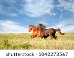 two horse with long mane run... | Shutterstock . vector #1042273567