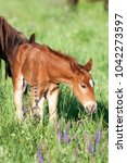 horse foal on pasture. a herd... | Shutterstock . vector #1042273597